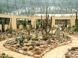 Vườn xương rồng Ba Vì